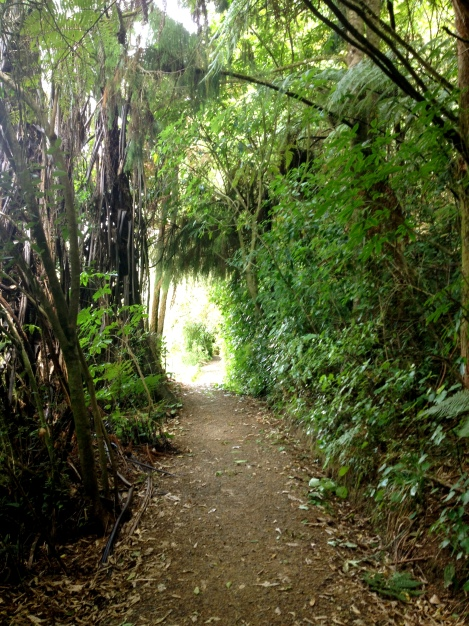 Ruakuri Bush Scenic Walk