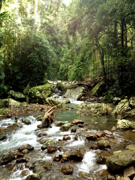 Springbrook National Park – Natural Bridge Goldcoast